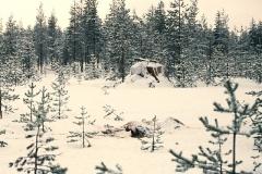 Luminen koju